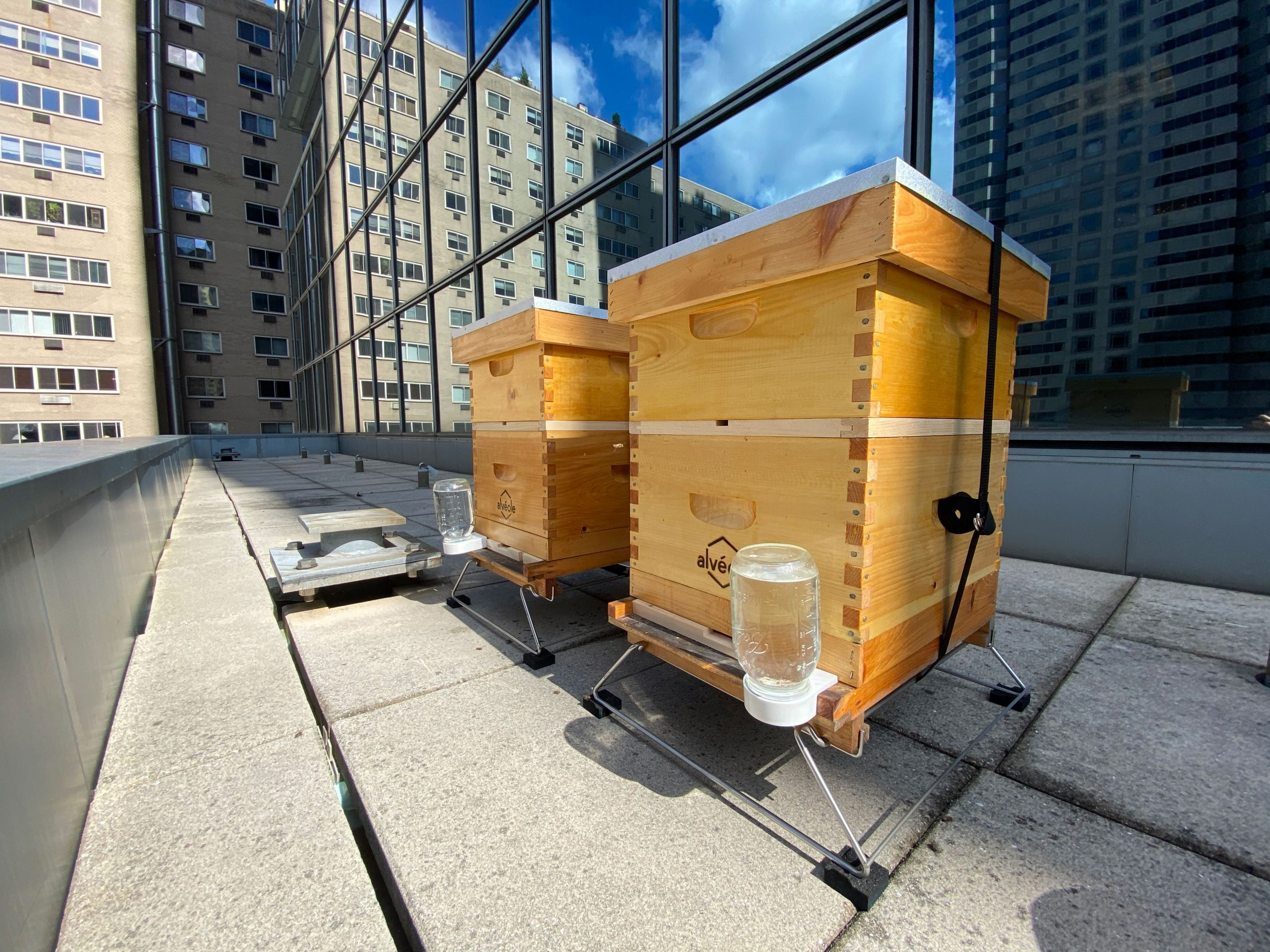 View of the honeybee hives on a balcony at 1901 Market Street facing the building's windows